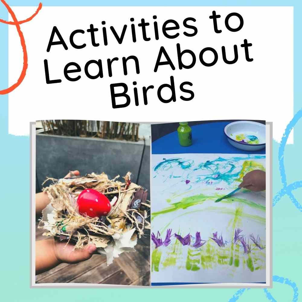 Learn About Birds for Preschoolers - Fun activities and resources - Image with Text